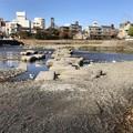 Photos: 鴨川デルタ(京都市上京区)
