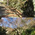 Photos: 桑實寺(近江八幡市)石垣