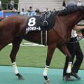 Photos: トロワボヌール(3回東京2日 12R 三浦特別(サラブレッド系3歳以上1000万下)出走馬)