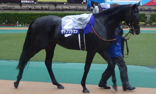 サトノクラウン(4回東京9日 11R 第156回 天皇賞(秋)(GI)出走馬)