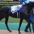 Photos: サトノクラウン(4回東京9日 11R 第156回 天皇賞(秋)(GI)出走馬)
