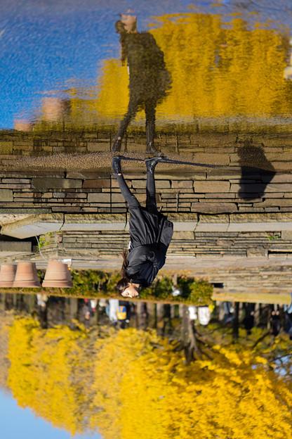 Upside down autumn