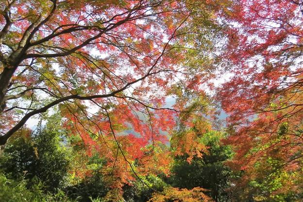 君ヶ野ダム湖畔の紅葉