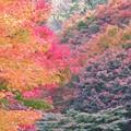 写真: 君ヶ野ダム湖畔の紅葉