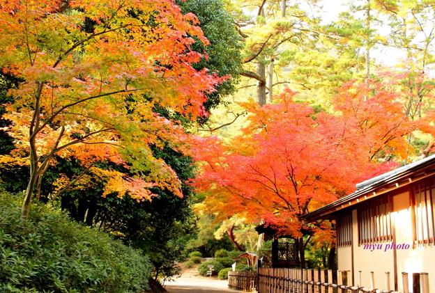 秋の趣~栗林公園~