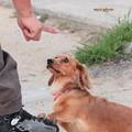 写真: 「はい、お手!」