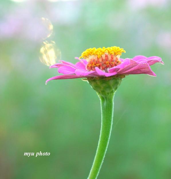 写真: 光のシャボン玉