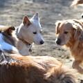 写真: 犬の会議