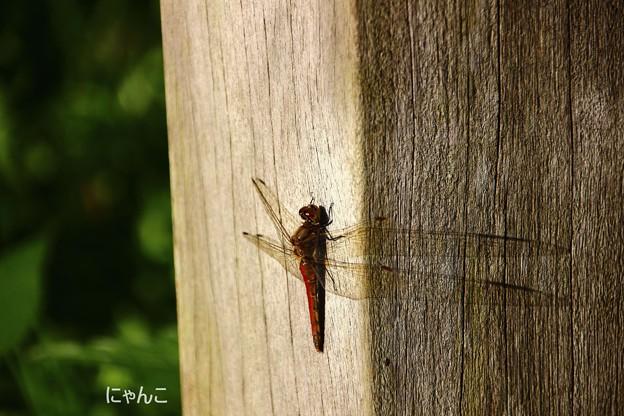 写真: ~翅が長~い!?~