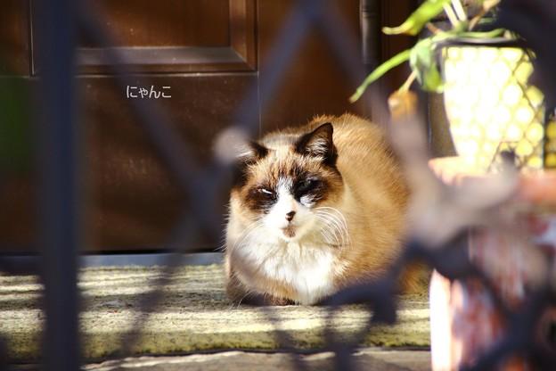 写真: ~番猫~