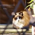 Photos: ~番猫~