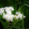 写真: 白く輝く花
