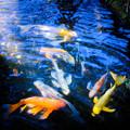 写真: 魚たちのつどい