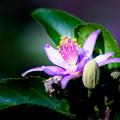 写真: 輝くお花