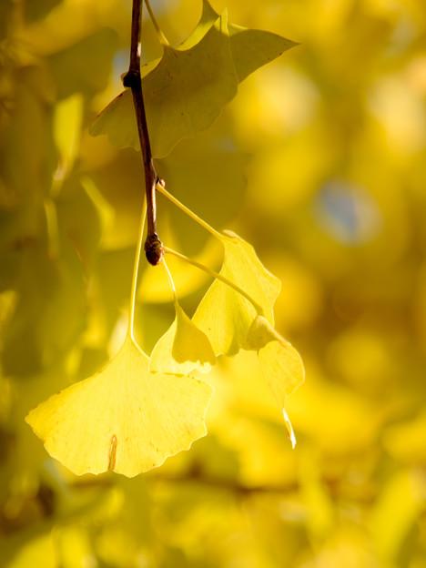 写真: 眩しい黄色