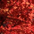 写真: 秋紅