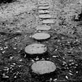 Photos: 雨の日のステップ