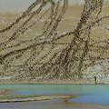写真: 砂壁アート