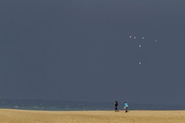 砂丘の海鳥