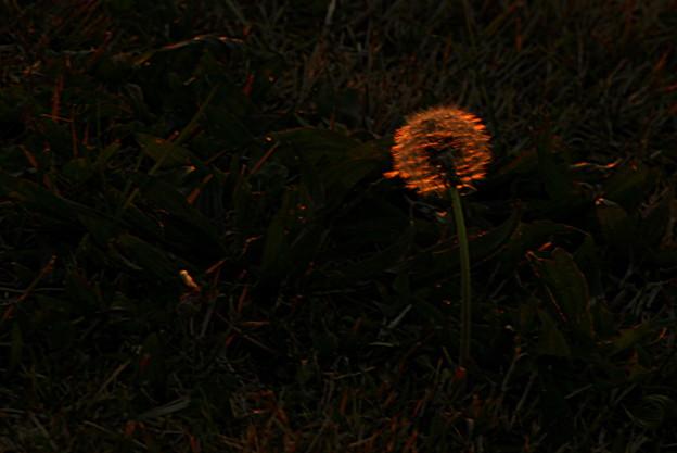 夕暮れ~alone