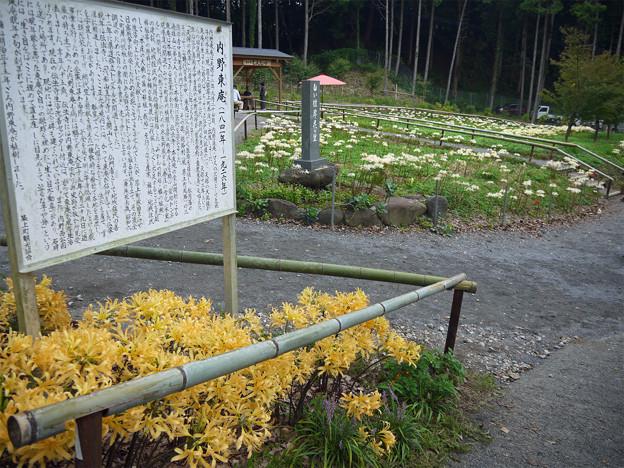 不老山正光寺・白い彼岸花まつり(2)