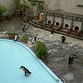 Photos: 福岡市動物園のペンギン(3)