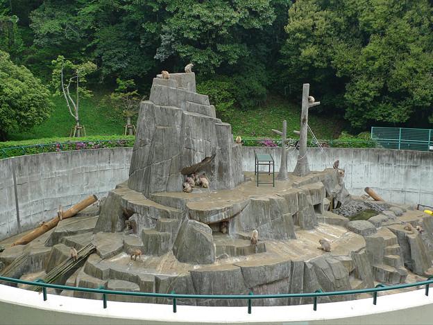 Photos: 福岡市動物園の猿山