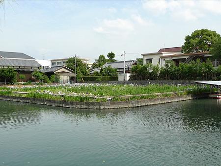 柳川~椛島菖蒲園(4)