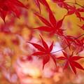 写真: 秋萌え