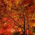 写真: 秋燃ゆ