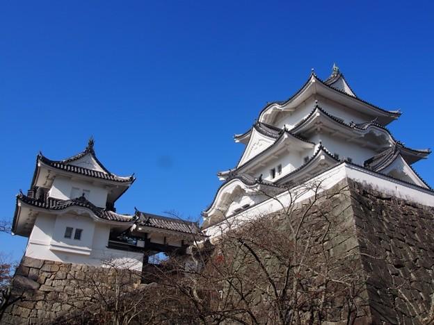 uenojousi_iga16