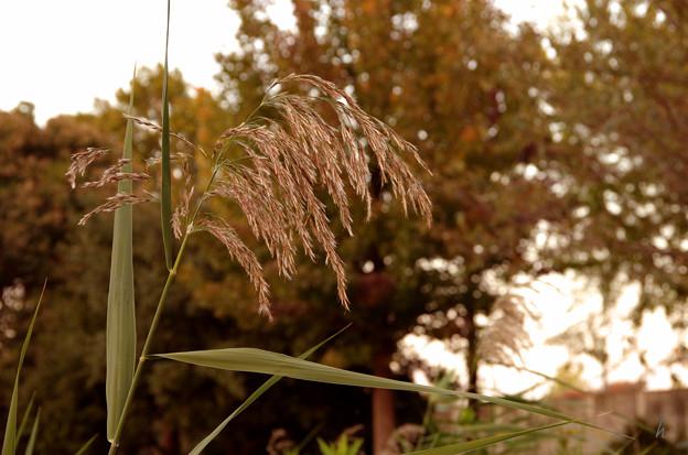 写真: 秋の景色