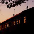 写真: 夕刻の家路