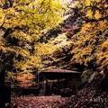 晩秋の聖宝寺