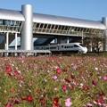 Photos: コスモスと特急列車