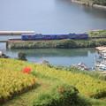 写真: 棚田と列車