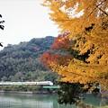 写真: 紅葉と橋りょう