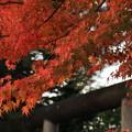 写真: 秋の静けさ