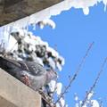 写真: 青空と鳥