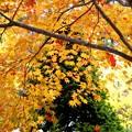 写真: 秋色のベール