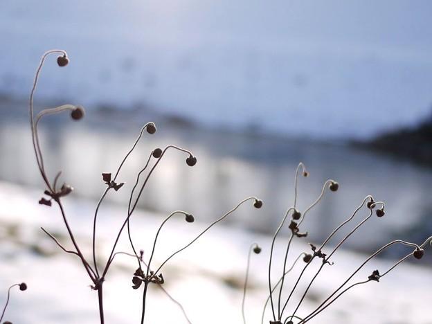 写真: 凍てつく朝に