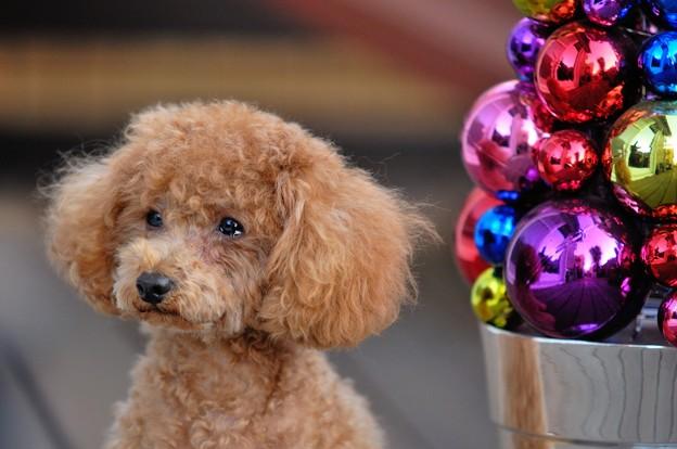 Photos: 犬も泣く