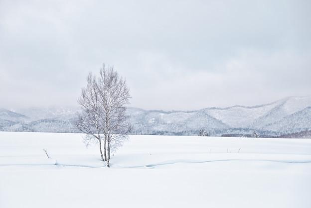 写真: 美瑛冬の美