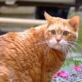 写真: 庭猫c