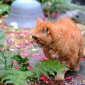 Photos: 庭猫3