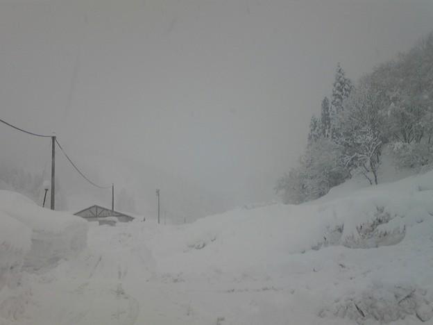 スノーバレー利賀、賑わってます!