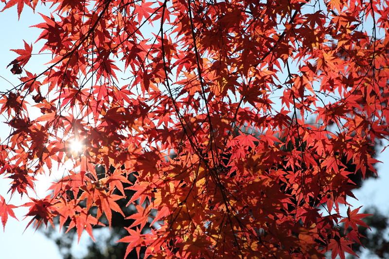 IMG_9763京都の紅葉_2010年11月