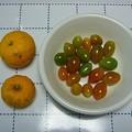 Photos: 141209-1 今年最後の柚子とミニトマト