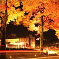 アメリカ楓並木としいのき迎賓館