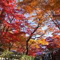 永源寺(3) 紅葉